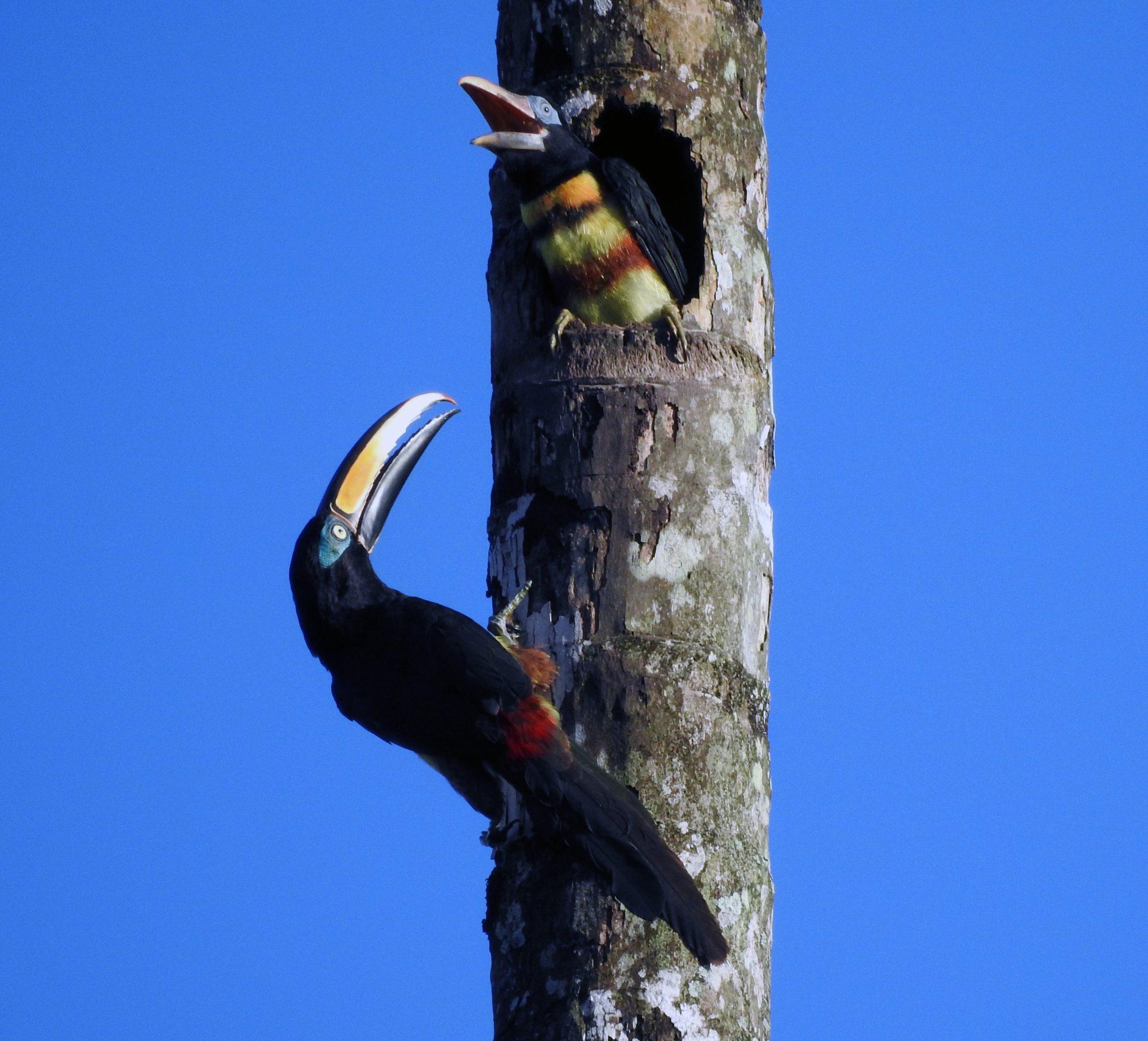 Ecuador Eco Birding