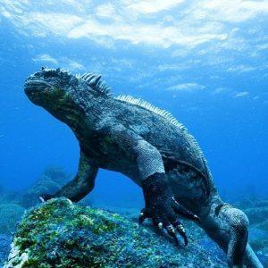 Galapagos Budget Tour