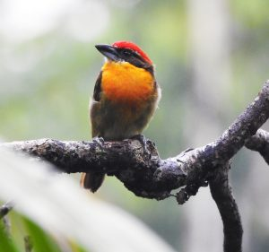 Ecuador Birdwatching Tours