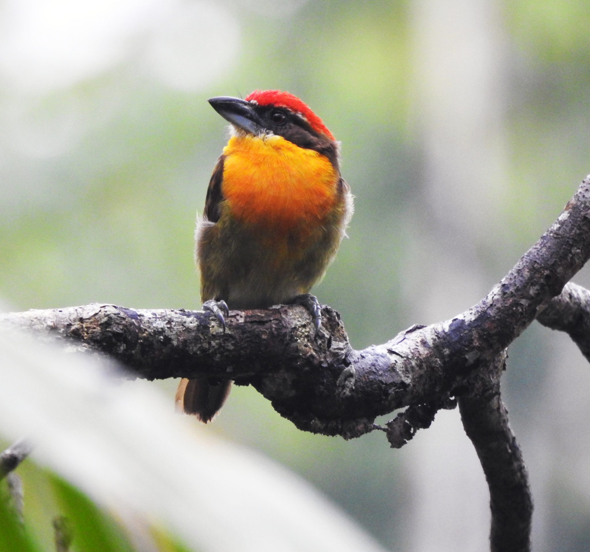 Ecuador Birdwatching Tour