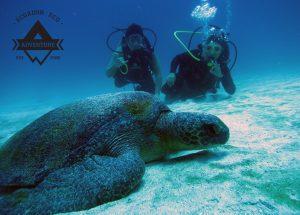 Galapagos Diving Tour