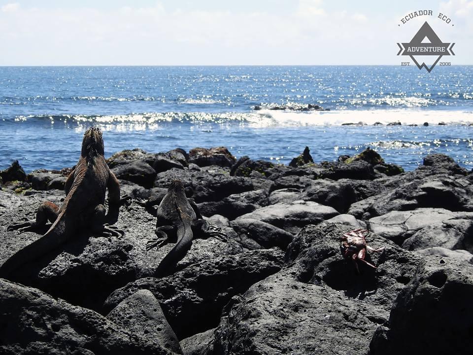 Galapagos Ecuador Eco Adventure