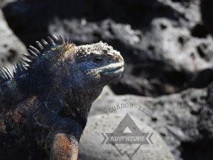 DIY Galapagos Santa Cruz Island