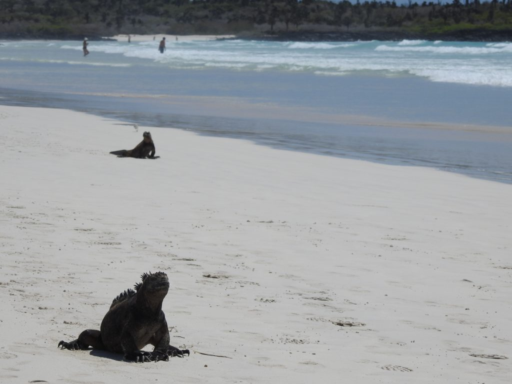 Best time to visit Galapagos Islands