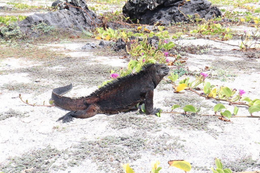 Visit San Cristobal - Galapagos Islands